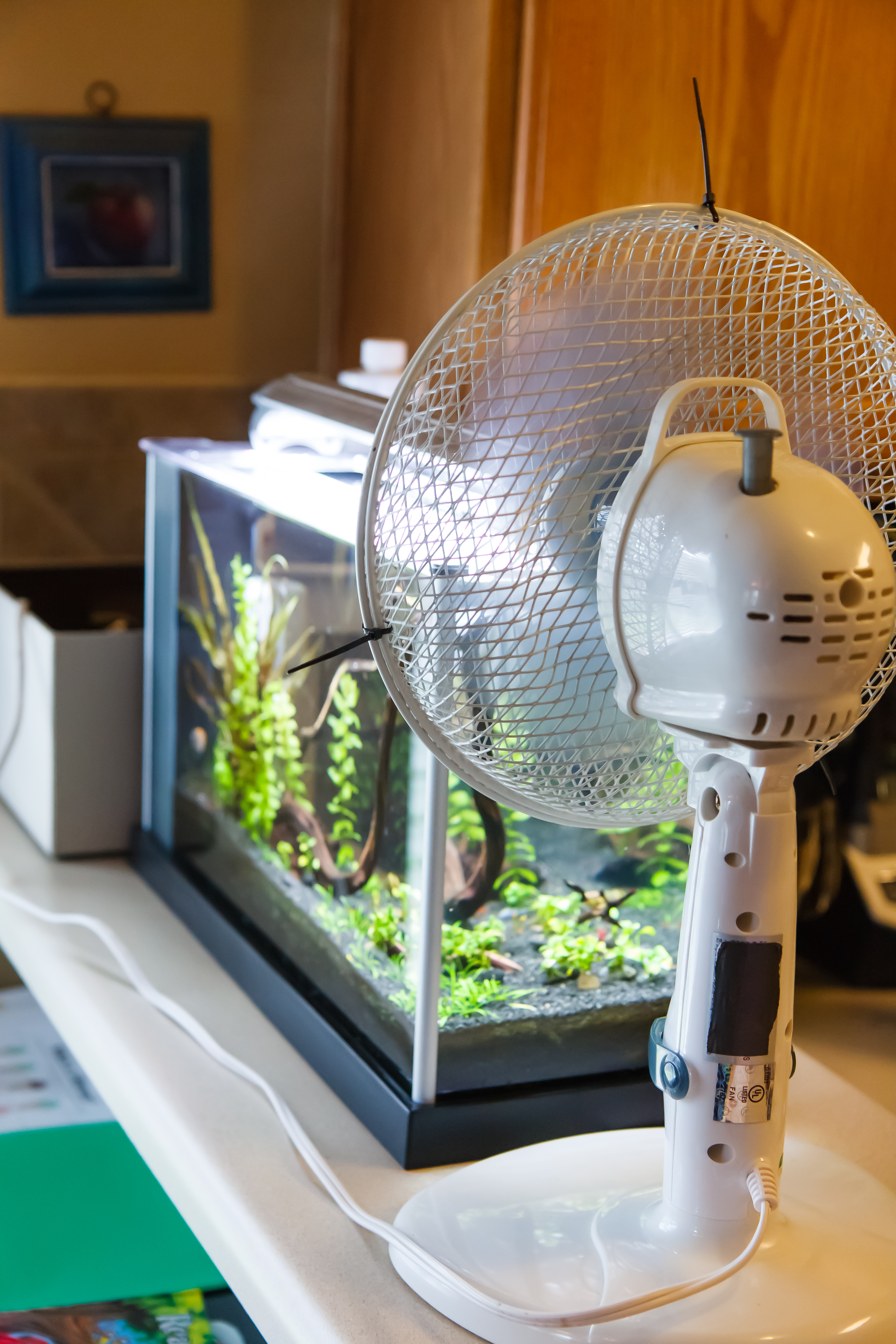 Using an Aquarium Cooling Fan - Does it Work?