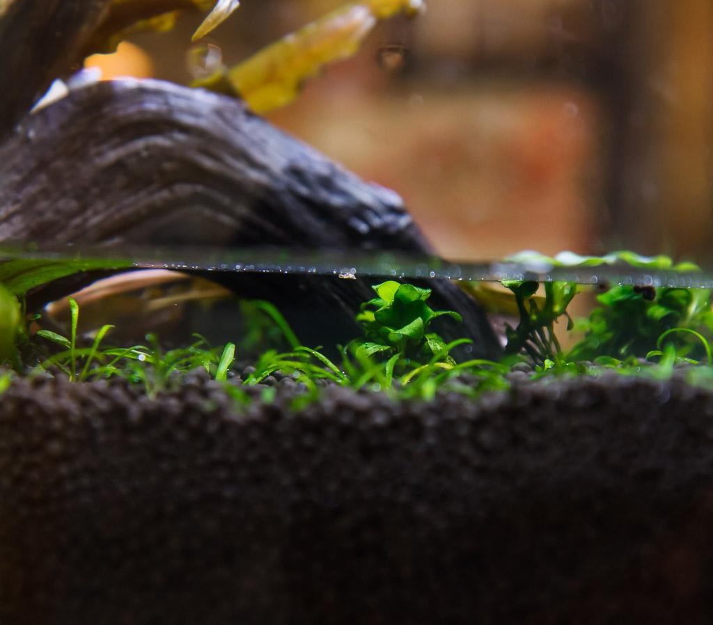 reshape of fluvial spec v aquarium