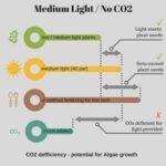 medium light with no co2