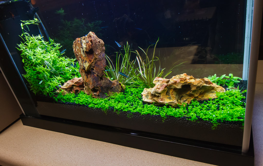 high tech fluval spec v