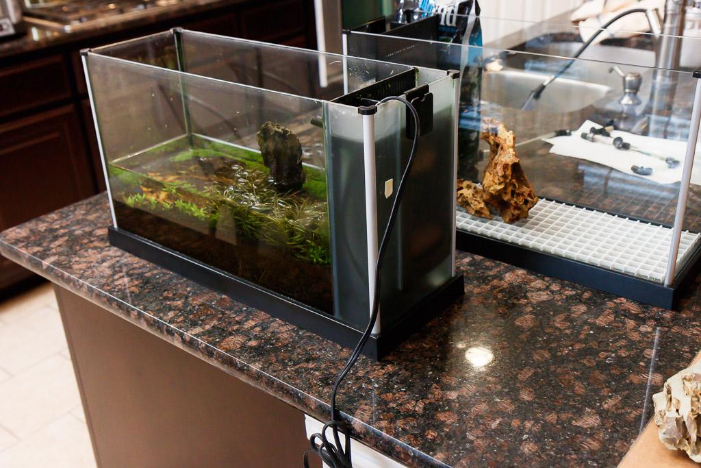 spec v aquarium aquascape