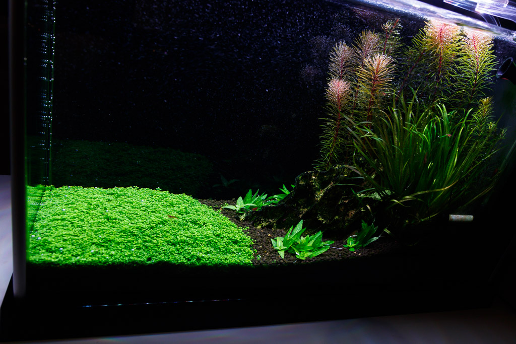 planted spec v aquarium