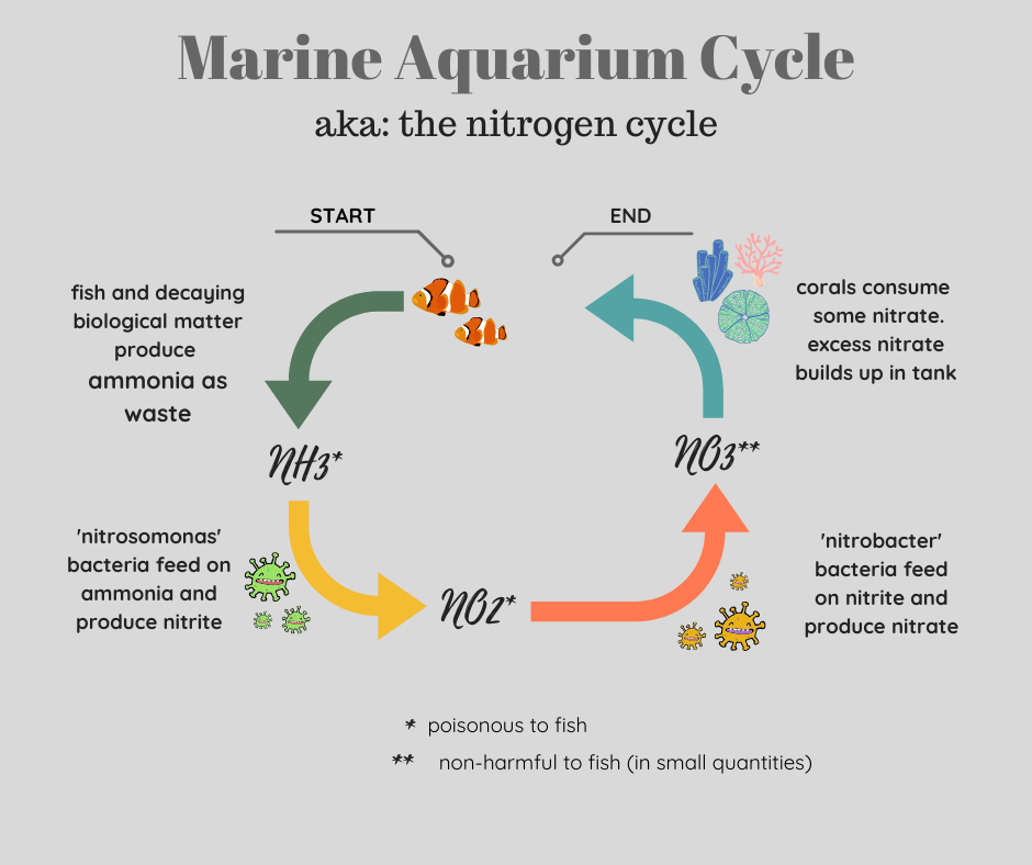 Marine aquarium cycle