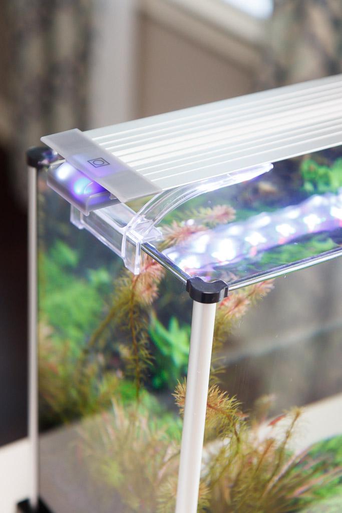 Finnex Planted+ HLC on Fluval Spec V Aquarium