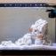 2020 Fluval EVO 13.5 Saltwater Aquarium Journal